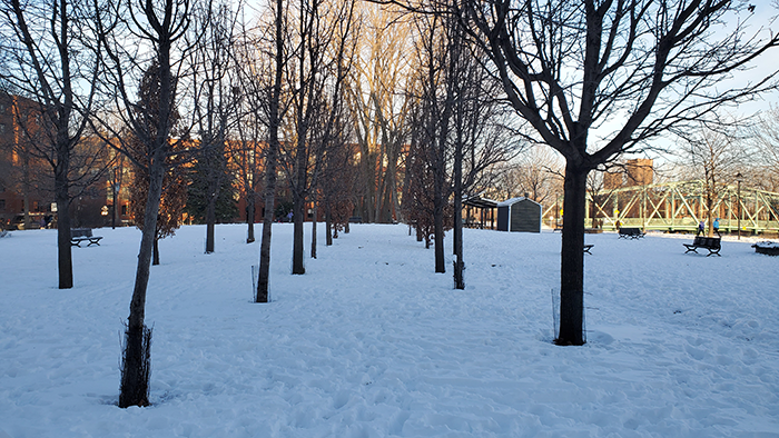 Daisy Peterson Sweeney Park 02 Montreal